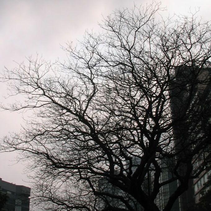 陰沉 禿樹