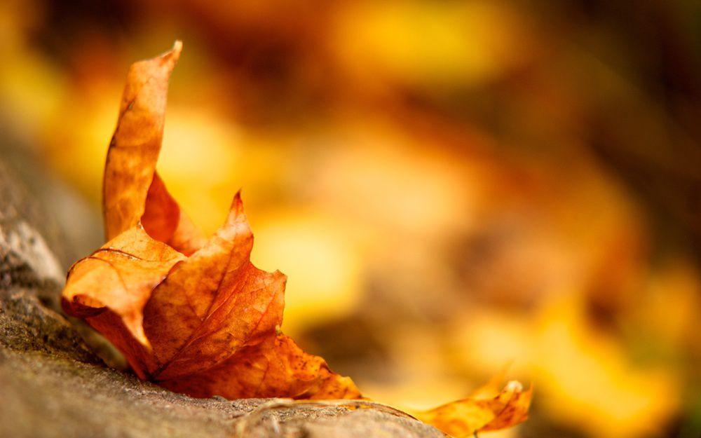 地上的秋葉