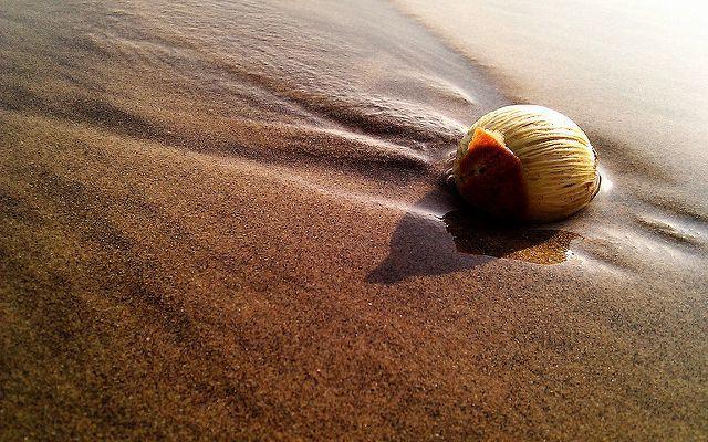 camera360 - 沙灘