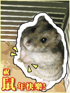 祝鼠年快樂!