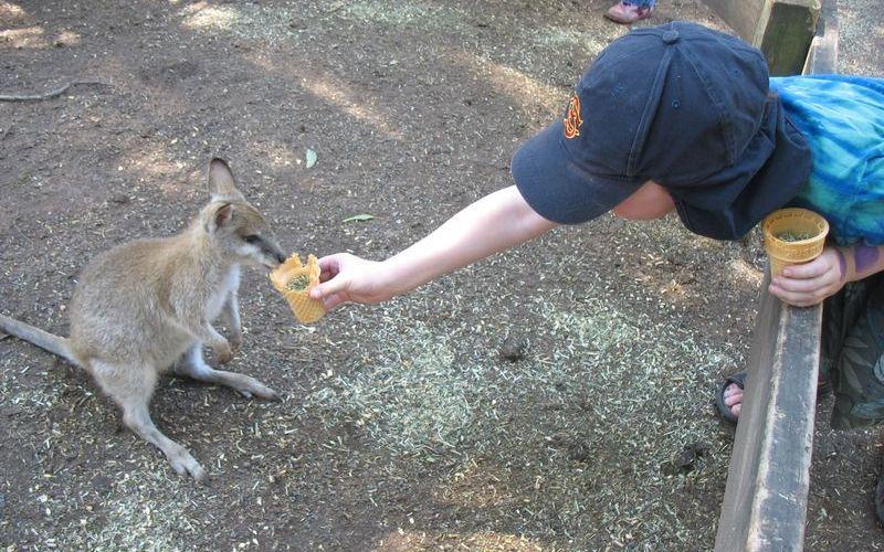 Featherdale Wildlife Park餵袋鼠的小孩