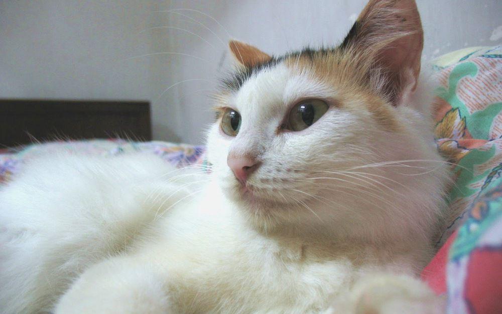 中山親戚家的貓